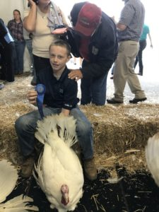 Cover photo for 4-H Livestock and Poultry Projects